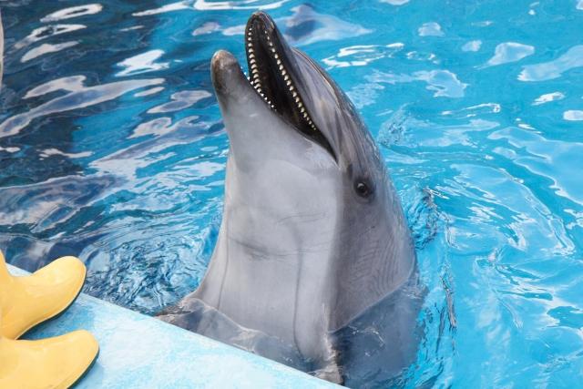 イルカやクジラ漁の批判をしていいのは生き物の命を奪っていない菜食主義の人だけだと思う