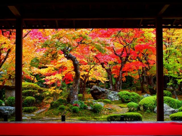 京都を舞台にしたおすすめ小説!(鴨川ホルモー、夜は短し歩けよ乙女など)
