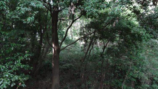 京極夏彦の魍魎の匣