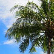 ココナッツオイル種類