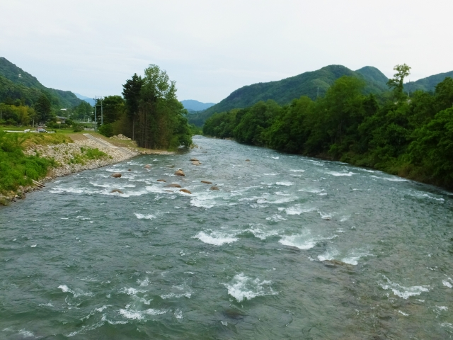 利根川に生息する魚