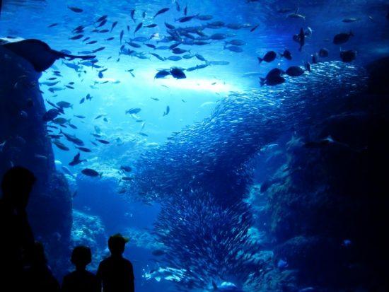 さいたま水族館で巨大魚を見よう