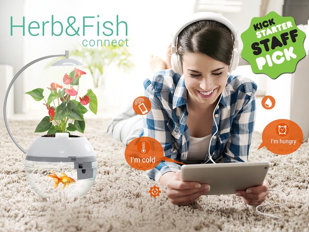 金魚とハーブを一緒に育てる?台湾発の「Herb&Fish CONNECT」が斬新すぎる!